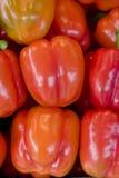 Pimentas vermelhas Imagem de Stock