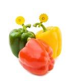 Pimentas vermelhas, amarelas e verdes Fotografia de Stock Royalty Free