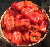 Pimentas vermelhas doces Homegrown Imagem de Stock Royalty Free