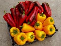 Pimentas vermelhas e amarelas Fotografia de Stock Royalty Free