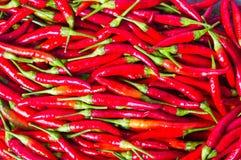 Pimentas vermelhas finas em um fundo da pilha Fotografia de Stock Royalty Free