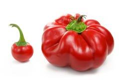 Pimentas vermelhas grandes e pequenas Imagem de Stock