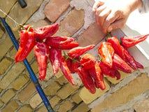 Pimentas vermelhas secas foto de stock