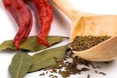 Pimento, caraway and bay leaves Stock Photography