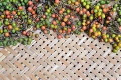 Pimentos frescos. Imagem de Stock