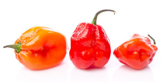Pimentos frescos do Habanero Fotos de Stock