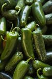 Pimentos frescos do jalapeno. imagem de stock royalty free