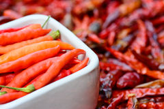 Pimentos frescos na bacia branca e em pimentas vermelhas secadas de baixo grau Fotografia de Stock Royalty Free