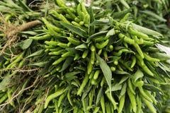 Pimentos verdes frescos Fotos de Stock