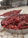 Piments rouges sur la terrasse Photo libre de droits