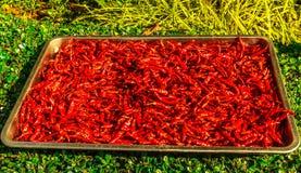 Piments rouges sur le marché en Thaïlande images stock