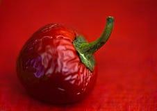 Pimienta caliente del chile rojo Imagenes de archivo
