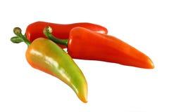 Pimienta de chile Fotografía de archivo