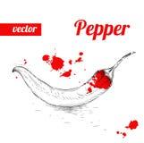 Pimienta de chile dibujada mano del estilo del bosquejo Ejemplo del vector de la comida del eco del vintage Pimientas maduras Imagenes de archivo