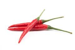 Pimienta de chile rojo aislada Imagen de archivo libre de regalías