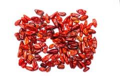 Pimienta del chile picante de Chile Piquin Imagenes de archivo