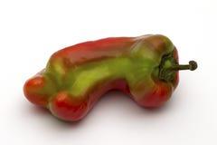 Pimienta dulce gigante que madura fotografía de archivo libre de regalías