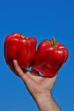 Pimienta dulce roja en una mano Imagen de archivo libre de regalías