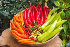 Pimienta es caliente y picante. Foto de archivo libre de regalías