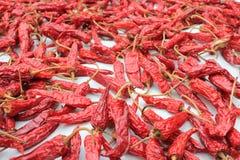Pimienta fuerte de los chiles Fotografía de archivo