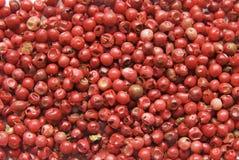Pimienta orgánica roja del fondo Fotografía de archivo libre de regalías