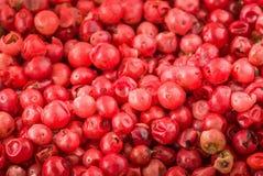 Pimienta rosada Foto de archivo libre de regalías