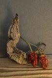 Pimienta seca caliente que se inclina contra la pared Fotografía de archivo libre de regalías