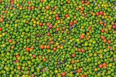 Pimienta Seeds3 Fotos de archivo