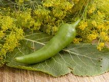 Pimienta verde amarga Fotografía de archivo