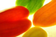 Pimientas Imagen de archivo libre de regalías