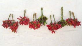 Pimientas calientes Imagen de archivo libre de regalías