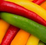 Pimientas coloreadas Imagen de archivo libre de regalías