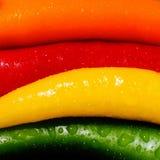 Pimientas coloreadas Imagen de archivo
