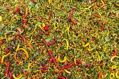 Pimientas de chile candentes maduras Fotos de archivo