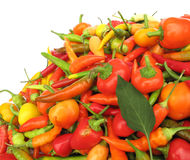 Pimientas de chile coloridas Fotos de archivo