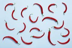 Pimientas de chile en el fondo azul, endecha roja del plano del chile Imagenes de archivo