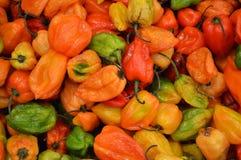 Pimientas de chile en el mercado mexicano Imagen de archivo libre de regalías