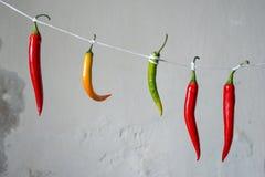 Pimientas de chile en una comida del diseño de la cuerda Fotos de archivo libres de regalías