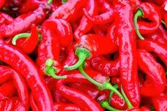 Pimientas de chile rojo Fotografía de archivo