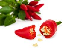 Pimientas de chile rojo Fotos de archivo libres de regalías
