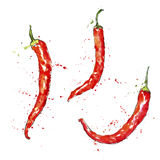 Pimientas de chile rojo de la acuarela del vector Foto de archivo libre de regalías