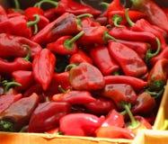 Pimientas de chile rojo en el mercado de los granjeros. Imagen de archivo