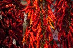Pimientas de chile secadas Fotografía de archivo