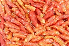Pimientas de chile secadas Imagenes de archivo