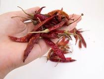 Pimientas de chile secadas tenencia de la mano Imagen de archivo