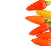 Pimientas del chile picante aisladas en el fondo blanco Fotos de archivo libres de regalías