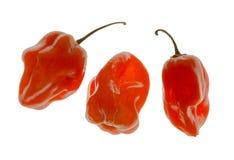 Pimientas del habanero Imagen de archivo libre de regalías