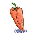 Pimientas dibujadas mano libre illustration