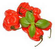 Pimientas escocesas rojas del capo imagen de archivo libre de regalías