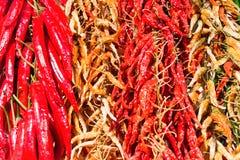 Pimientas frías calientes rojas y verdes Foto de archivo